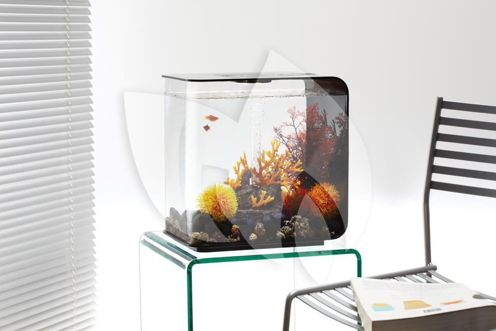 biorb flow aquarium 30 liter led zwart. Black Bedroom Furniture Sets. Home Design Ideas