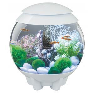 biorb halo aquarium 60 liter led maanlicht wit. Black Bedroom Furniture Sets. Home Design Ideas