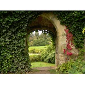 Doorkijk met klimop tuinposter