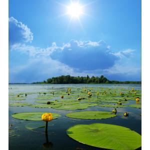 Waterlelies tuinposter