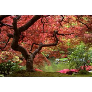Herfst tuinposter