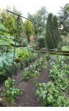 Plantenstokken set van 12 stuks