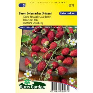 Moestuin|Moestuin zaden|Fruitzaad