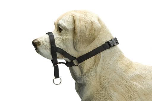 IPTS Dog control Nylon Zwart 34 cm
