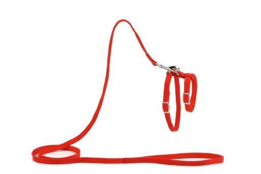 Beeztees kattentuigje nylon rood 130 cm x 10 mm