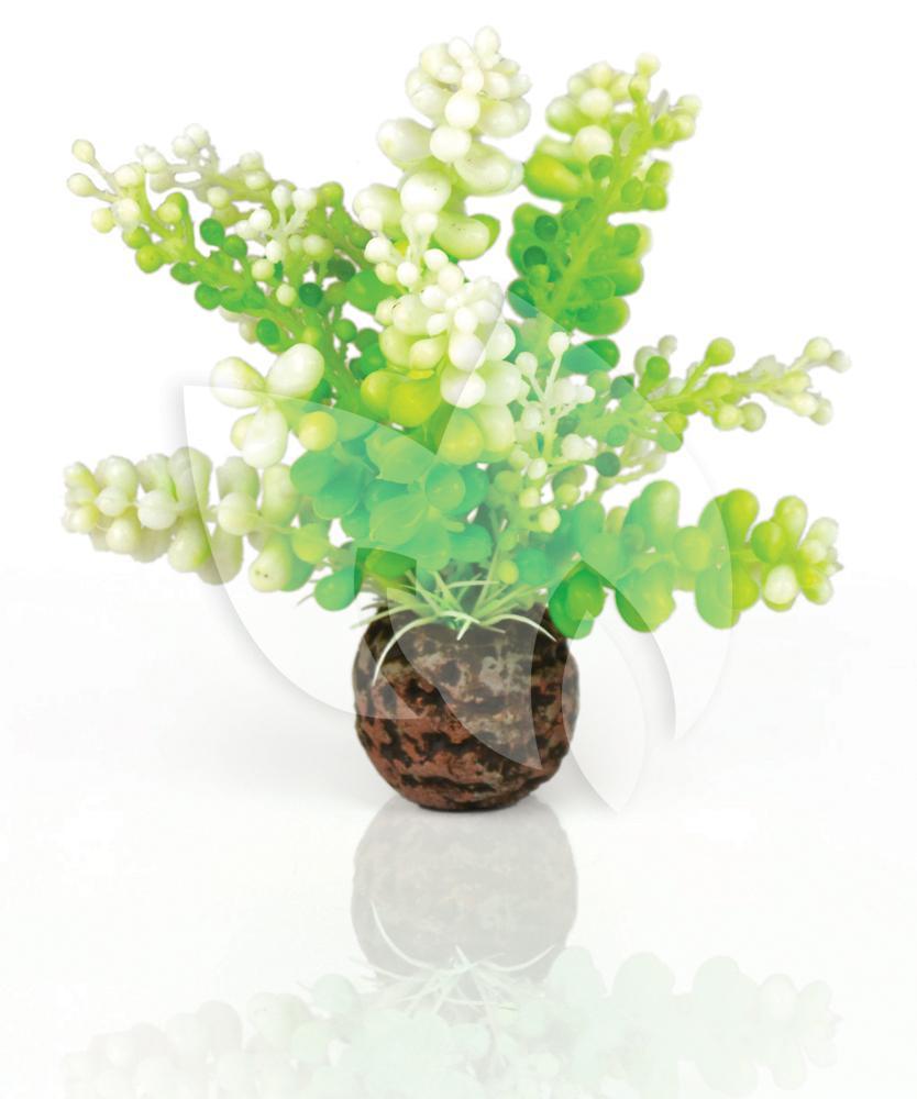 Biorb caulerpa groen aquarium decoratie for Decoratie aquarium
