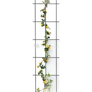 Klimrek Voor Planten.Express Metalen Klimrek Rechthoekig Antraciet Tuinexpress Nl