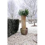Winterbeschermingsmat rijststro