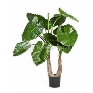 Korting Kunstplant Alocasia calidora M