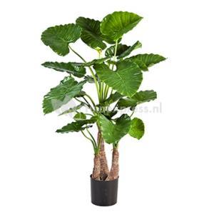 Korting Kunstplant Alocasia calidora L