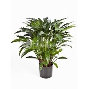 Kunstplant Calathea M