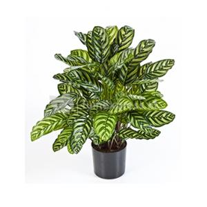 Kunstplant Calathea green L