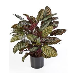 Kunstplant Calathea red L