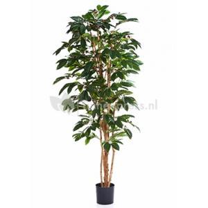 Korting Kunstplant Coffea arabica M