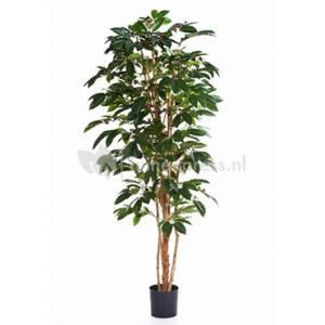Korting Kunstplant Coffea arabica L