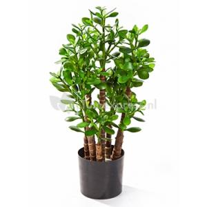 Korting Kunstplant Crassula ovata M