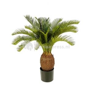 Korting Kunstplant Cycas palm L