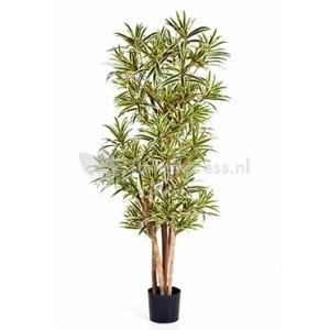 Kunstplant Dracaena reflexa L