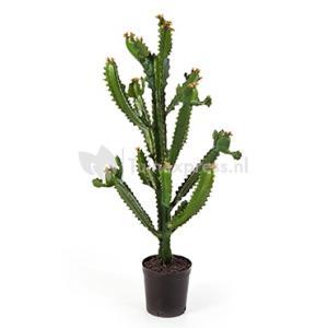 Kunstplant Euphorbia cactus XL