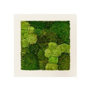 Moswand schilderij polystone vierkant naturel 70B