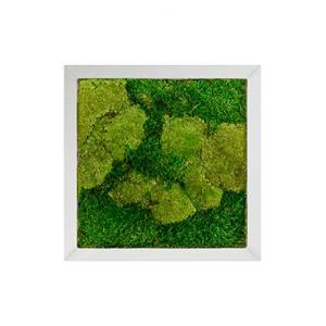 Moswand schilderij metaal superline vierkant 50A