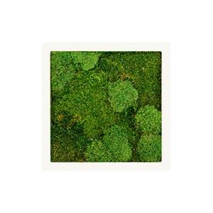 Moswand schilderij metaal stiel vierkant wit mat 50B