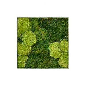 Korting Moswand schilderij metaal superline L vierkant 50B