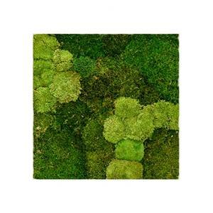 Moswand schilderij metaal stiel L vierkant wit mat 70B