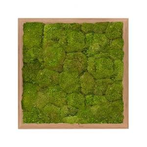 Moswand schilderij bamboe vierkant 40 bolmos