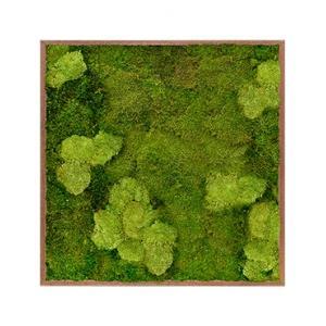 Moswand schilderij meranti hout vierkant 100 mix