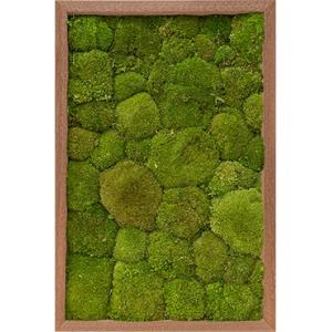 Moswand schilderij meranti hout rechthoek 60 bolmos
