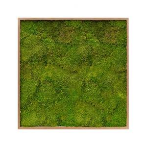 Moswand schilderij bamboe vierkant 100 platmos