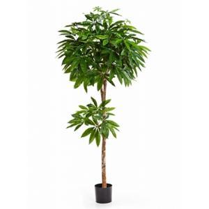 Kunstplant Pachira Geldboom L