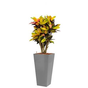 Standard All in 1 Hydrocultuur Croton iceton vierkant zilver