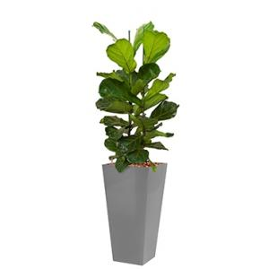 Deluxe All in 1 Hydrocultuur Ficus lyrata vierkant zilver