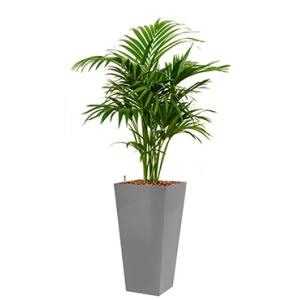 Deluxe All in 1 Hydrocultuur Kentia palm forsteriana vierkant zilver