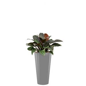 Deluxe All in 1 Hydrocultuur Philodendron imperial red rond zilver