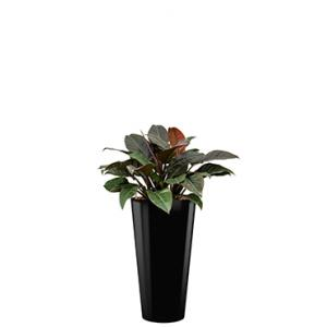 Deluxe All in 1 Hydrocultuur Philodendron imperial red rond zwart