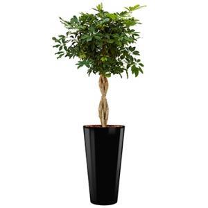 Deluxe All in 1 Hydrocultuur Schefflera arboricola rond zwart