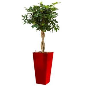 Deluxe All in 1 Hydrocultuur Schefflera arboricola vierkant rood
