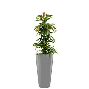 Standard All in 1 Hydrocultuur Ficus amstel rond zilver
