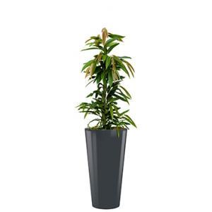 Dagaanbieding - Standard All in 1 Hydrocultuur Ficus amstel rond antraciet dagelijkse aanbiedingen