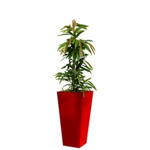 Standard All in 1 Hydrocultuur Ficus amstel vierkant rood