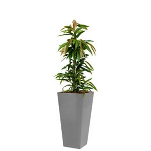 Standard All in 1 Hydrocultuur Ficus amstel vierkant zilver