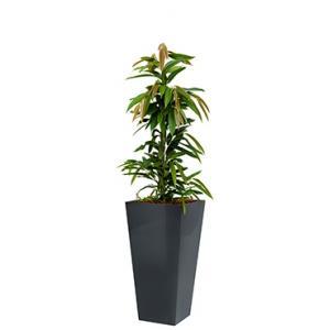 Standard All in 1 Hydrocultuur Ficus amstel vierkant antraciet