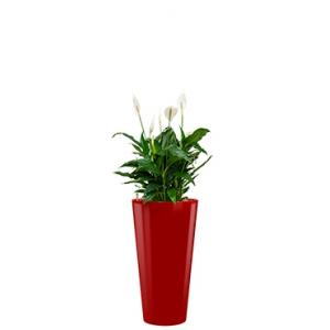 Standard All in 1 Hydrocultuur Spathiphyllum mont blanc rond rood