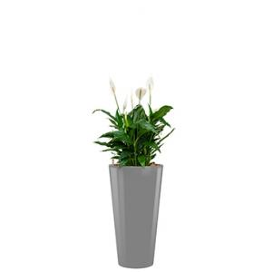Standard All in 1 Hydrocultuur Spathiphyllum mont blanc rond zilver