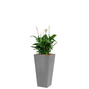 Standard All in 1 Hydrocultuur Spathiphyllum mont blanc vierkant zilver
