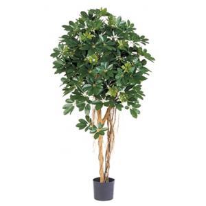 Kunstplant Schefflera arboricola L