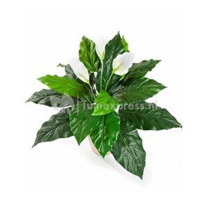 Kunstplant Spathiphyllum M